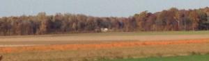 Pumpkins 1664
