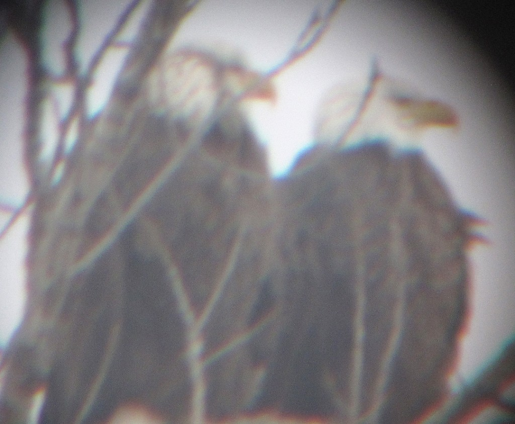 Eagles together_3371