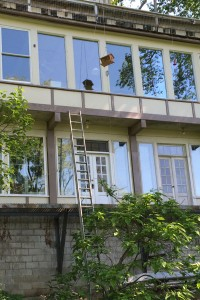 Ladder to Windows_0746 - Copy