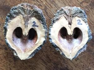 Split Nut 5063